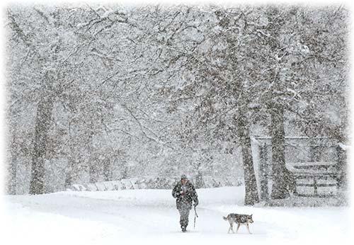 snowy - برفی