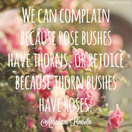 We can complain because rose bushes have thorns or rejoice because thorns have roses.